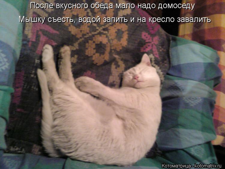 Котоматрица: После вкусного обеда мало надо домоседу Мышку съесть, водой запить и на кресло завалить