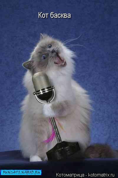 Котоматрица: Кот басква