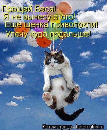 Котоматрица: Прощай,Вася! Я не вынесу этого! Еще щенка приволокли! Улечу куда подальше!