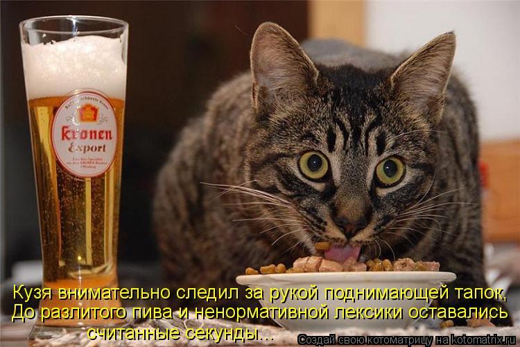 Котоматрица: Кузя внимательно следил за рукой поднимающей тапок, До разлитого пива и ненормативной лексики оставались  считанные секунды...