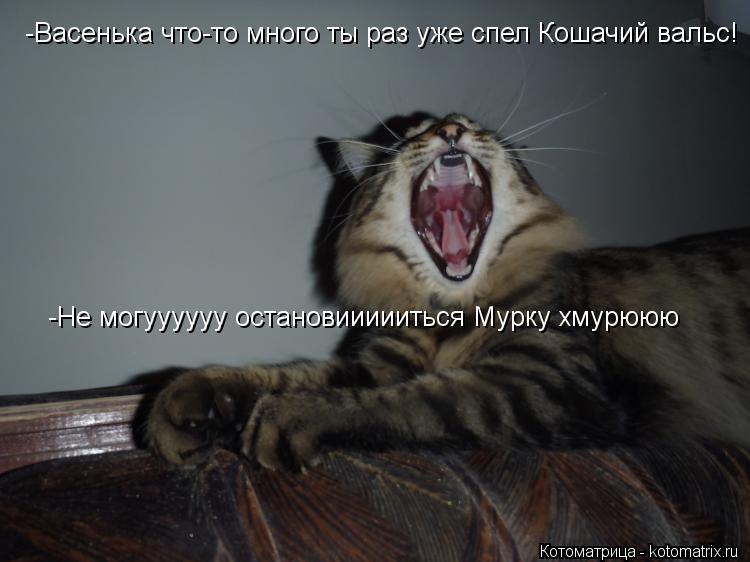 Котоматрица: -Васенька что-то много ты раз уже спел Кошачий вальс! -Не могуууууу остановиииииться Мурку хмурююю