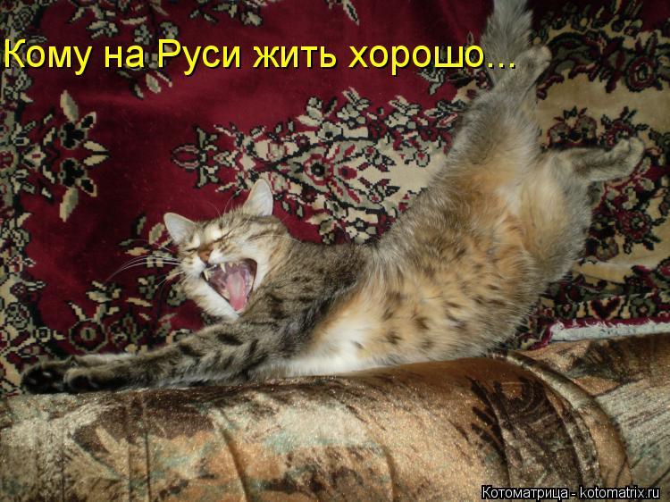 Котоматрица: Кому на Руси жить хорошо...