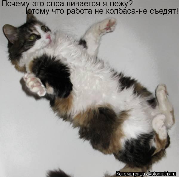 Котоматрица: Почему это спрашивается я лежу? Потому что работа не колбаса-не съедят!