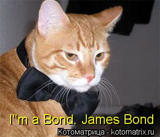 "Котоматрица: I""m a Bond. James Bond"