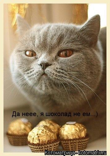 Котоматрица: Да неее, я шоколад не ем...)
