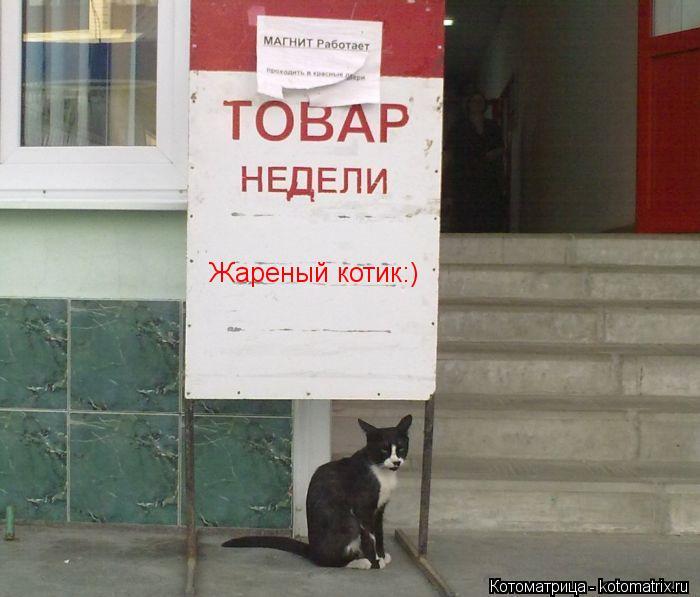 Котоматрица: Жареный котик:)