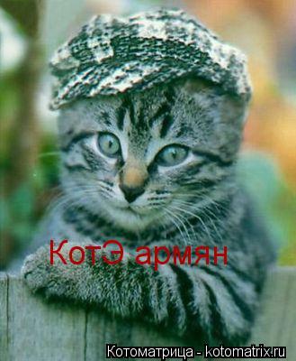 Котоматрица: КотЭ армян