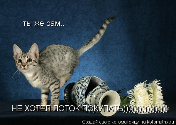 Котоматрица: ты же сам... НЕ ХОТЕЛ ЛОТОК ПОКУПАТЬ)))))))))))))))))