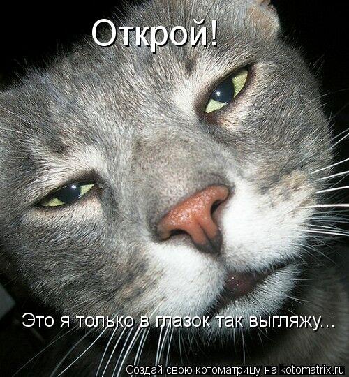 Котоматрица: Открой! Это я только в глазок так выгляжу...