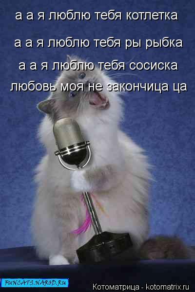 Котоматрица: а а я люблю тебя котлетка а а я люблю тебя ры рыбка а а я люблю тебя сосиска  любовь моя не закончица ца