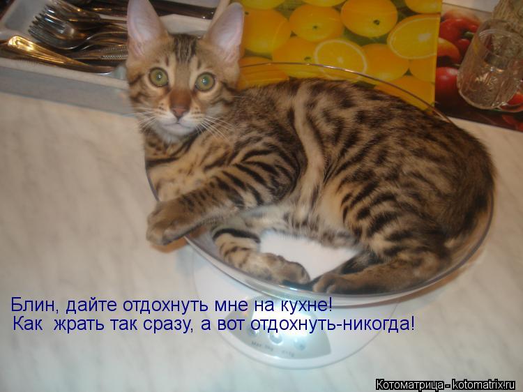 Котоматрица: Блин, дайте отдохнуть мне на кухне!  Как  жрать так сразу, а вот отдохнуть-никогда!