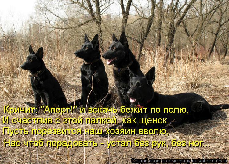 """Котоматрица: И счастлив с этой палкой, как щенок. Кричит: """"Апорт!"""" и вскачь бежит по полю, Пусть порезвится наш хозяин вволю, Нас чтоб порадовать - устал без"""