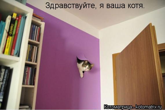Котоматрица: Здравствуйте, я ваша котя.