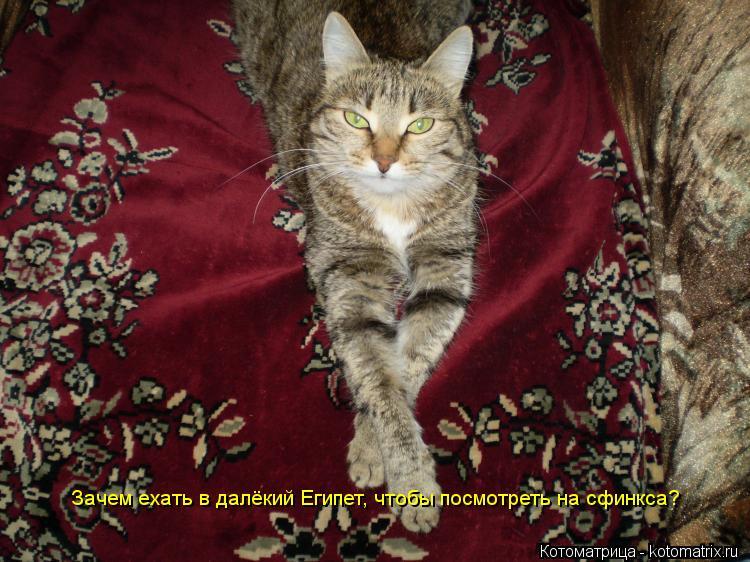 Котоматрица: Зачем ехать в далёкий Египет, чтобы посмотреть на сфинкса?