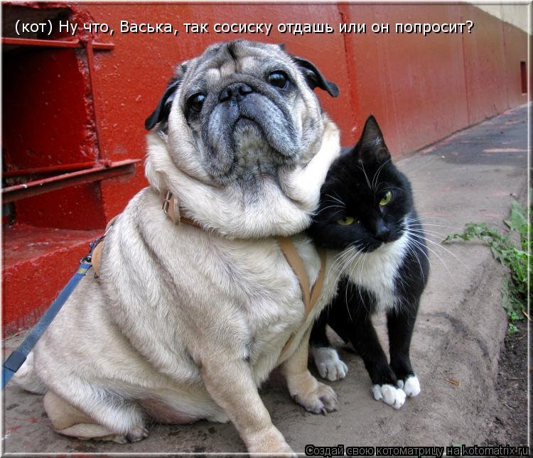 Котоматрица: (кот) Ну что, Васька, так сосиску отдашь или он попросит?