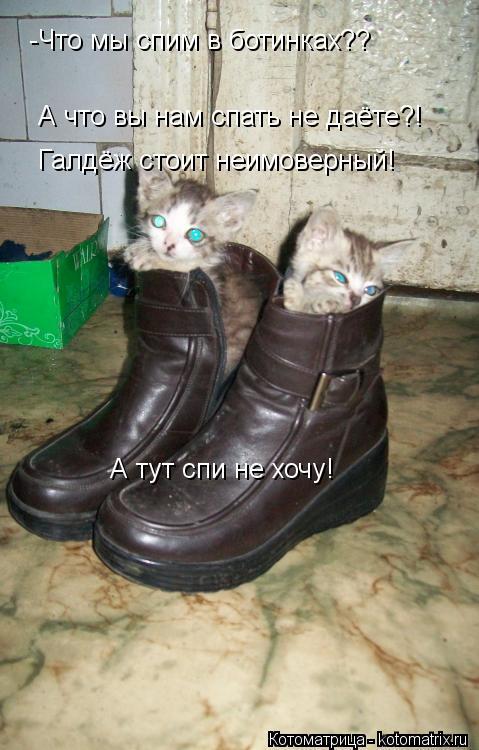 Котоматрица: -Что мы спим в ботинках??  Хороший вопрос! а что вы нам спать не даёте А что вы нам спать не даёте?! Галдёж стоит неимоверный!  А тут спи не хочу!