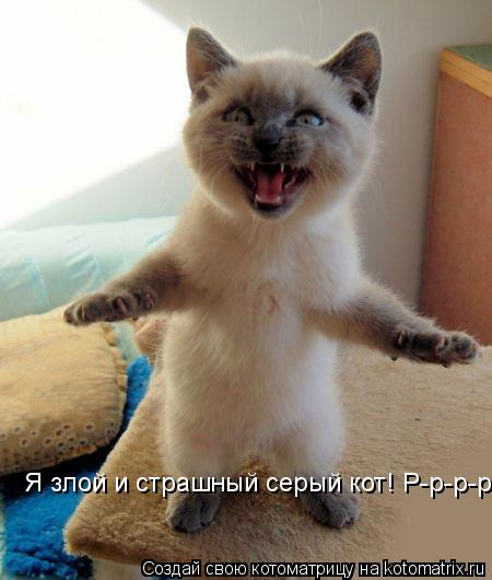 Котоматрица: Я злой и страшный серый кот! Р-р-р-р-р!!!!!!