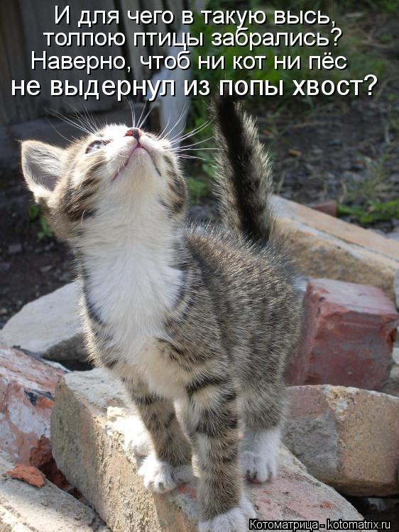 Котоматрица: И для чего в такую высь, толпою птицы забрались? Наверно, чтоб ни кот ни пёс не выдернул из попы хвост?