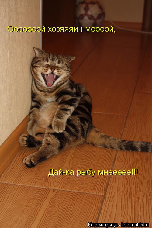 Котоматрица: Ооооооой хозяяяин моооой, Дай-ка рыбу мнеееее!!!