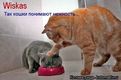 Котоматрица: Wiskas Так кошки понимают нежность...