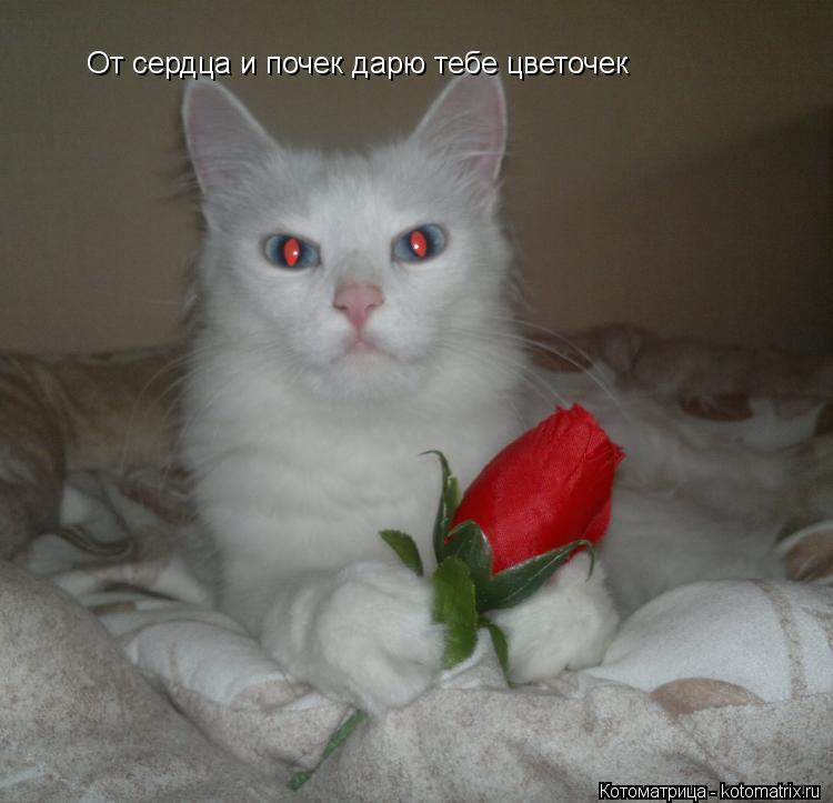Котоматрица: От сердца и почек дарю тебе цветочек