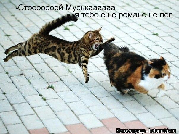 Котоматрица: -Стооооооой Муськаааааа...  я тебе еще романс не пел...