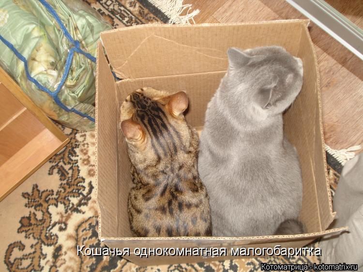 Котоматрица: Кошачья однокомнатная малогобаритка