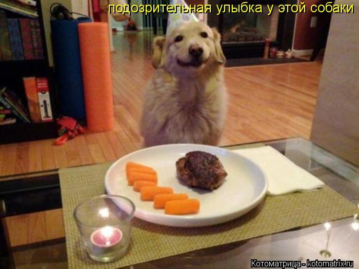 Котоматрица: подозрительная улыбка у этой собаки