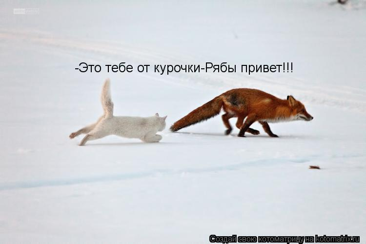 Котоматрица: -Это тебе от курочки-Рябы привет!!!