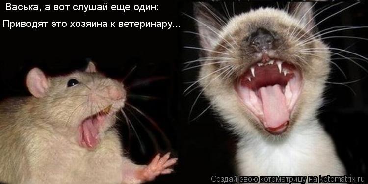 Котоматрица: Васька, а вот слушай еще один: Приводят это хозяина к ветеринару...