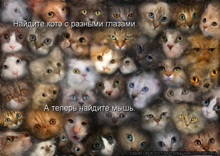 Котоматрица: Найдите котэ с разными глазами. А теперь найдите мышь.