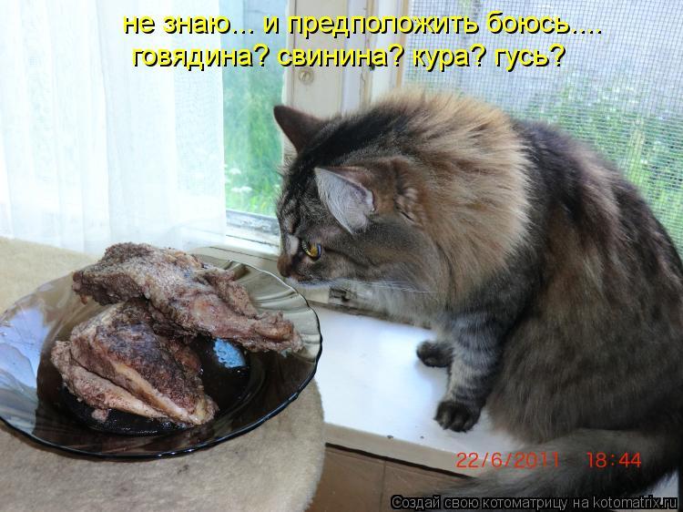 Котоматрица: не знаю... и предположить боюсь.... говядина? свинина? кура? гусь?