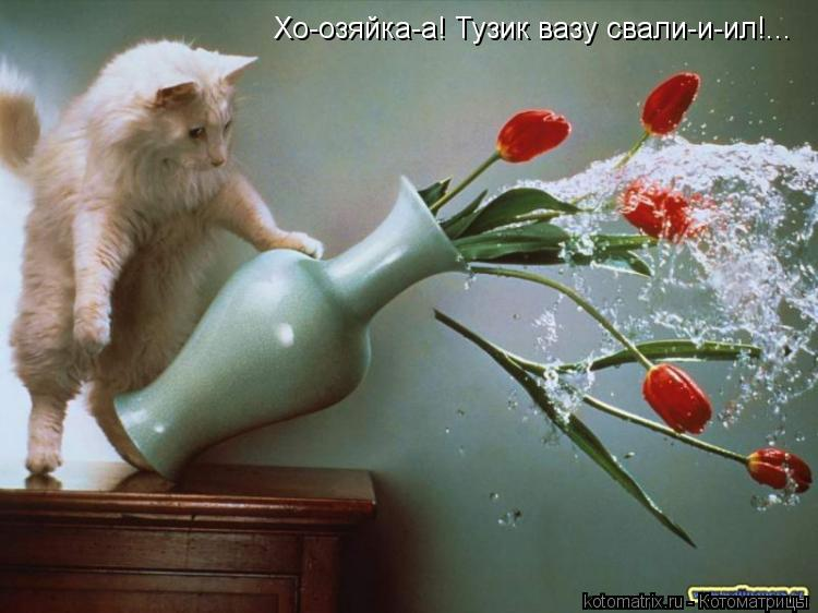 Котоматрица: Хо-озяйка-а! Тузик вазу свали-и-ил!...