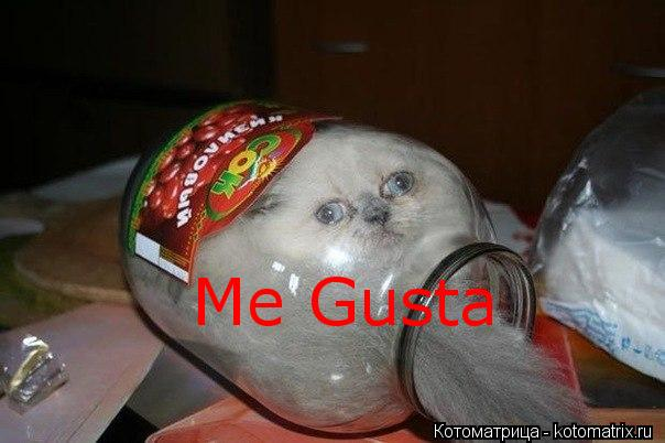 Котоматрица: Me Gusta