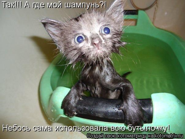 Котоматрица: Так!!! А где мой шампунь?! Небось сама использовала всю бутылочку!