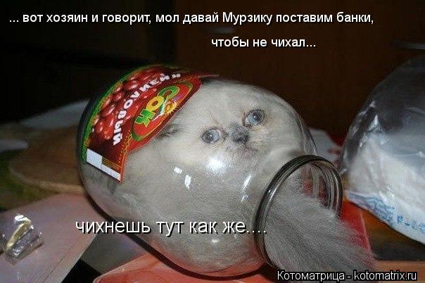 Котоматрица: ... вот хозяин и говорит, мол давай Мурзику поставим банки, чтобы не чихал... чихнешь тут как же....
