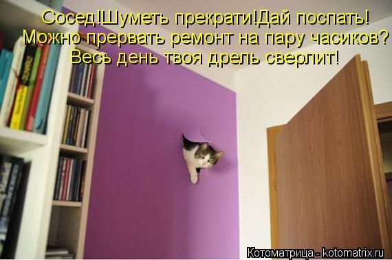 Котоматрица: Сосед!Шуметь прекрати!Дай поспать! Можно прервать ремонт на пару часиков? Весь день твоя дрель сверлит!