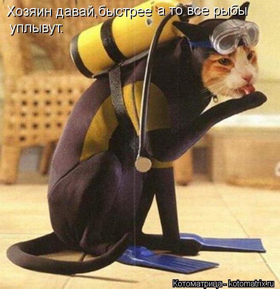 Котоматрица: Хозяин давай,быстрее а то все рыбы уплывут.
