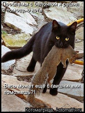 Котоматрица: Проблемы с белочкой я решил с помощью кота ... Вась может ещё с гаишниками поможешь?!