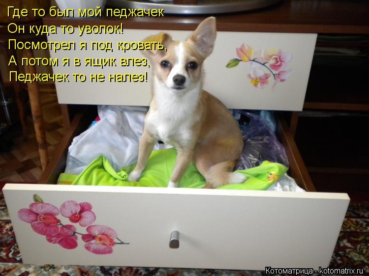 Котоматрица: Где то был мой педжачек  Он куда то уволок! Посмотрел я под кровать, А потом я в ящик влез, Педжачек то не налез!