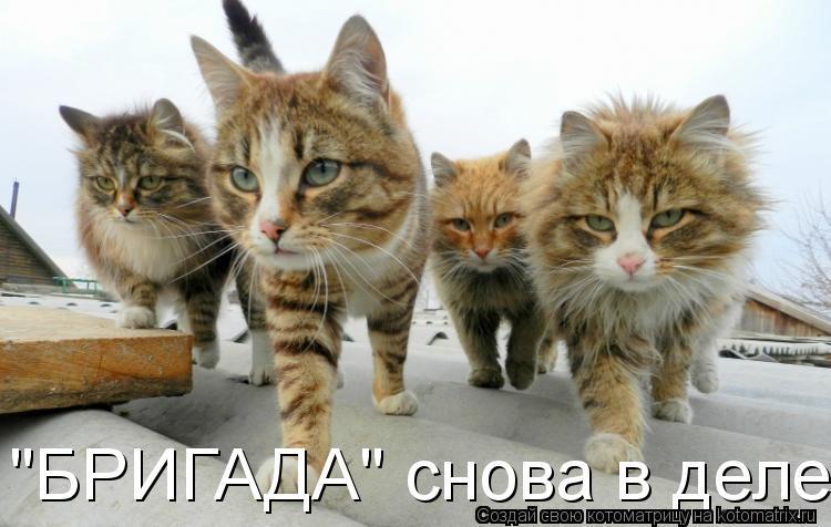 """Котоматрица: """"БРИГАДА"""" снова в деле"""