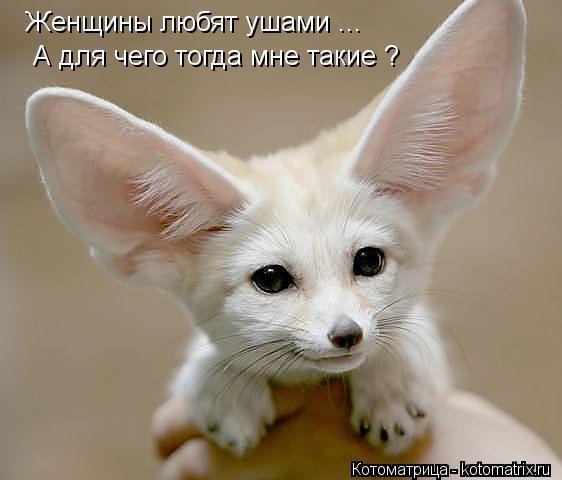Котоматрица: Женщины любят ушами ...  А для чего тогда мне такие ?