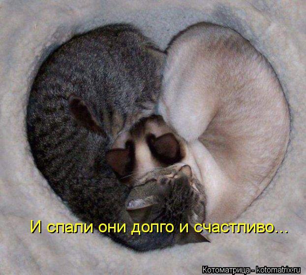 Котоматрица: И спали они долго и счастливо...