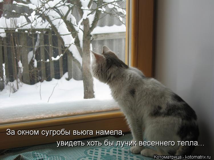 Котоматрица: За окном сугробы вьюга намела, увидеть хоть бы лучик весеннего тепла...