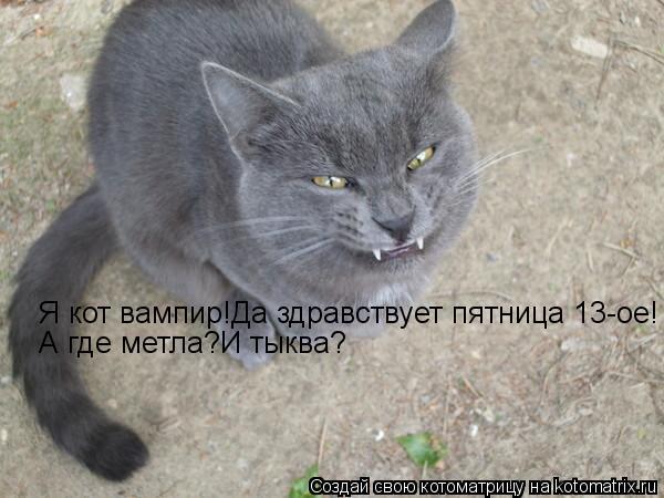 Котоматрица: Я кот вампир!Да здравствует пятница 13-ое! А где метла?И тыква?
