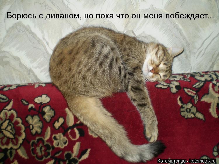 Котоматрица: Борюсь с диваном, но пока что он меня побеждает...