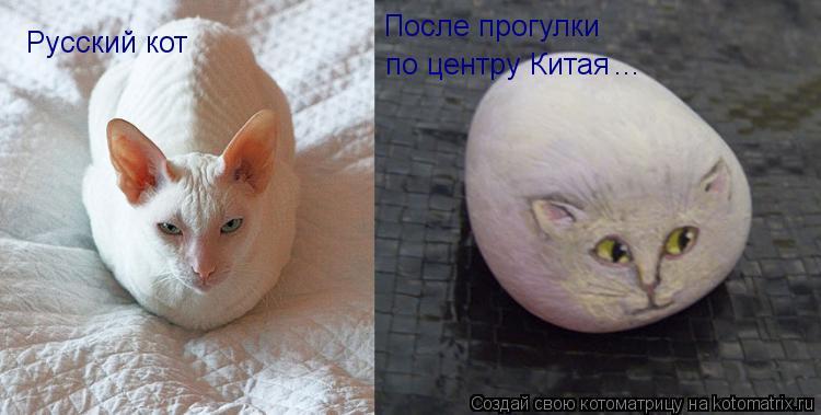 Котоматрица: Русский кот После прогулки  по центру Китая ...