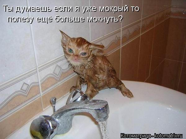 Котоматрица: Ты думаешь если я уже мокрый то   полезу ещё больше мокнуть?