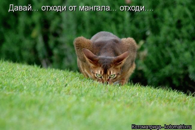 Котоматрица: Давай... отходи от мангала... отходи....