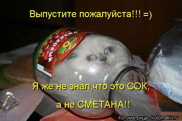 Котоматрица: Выпустите пожалуйста!!! Я же не знал,что это СОК,  а не СМЕТАНА!! а не СМЕТАНА!! =)